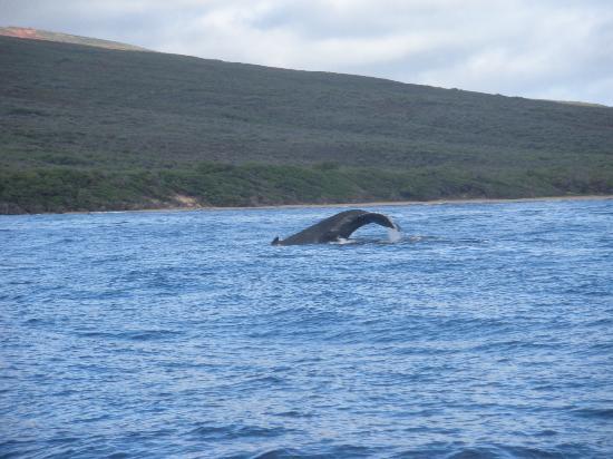 Captain Steve's Rafting: Whales