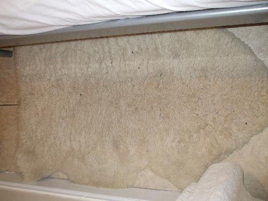 Blair House Apartments : bedroom rug