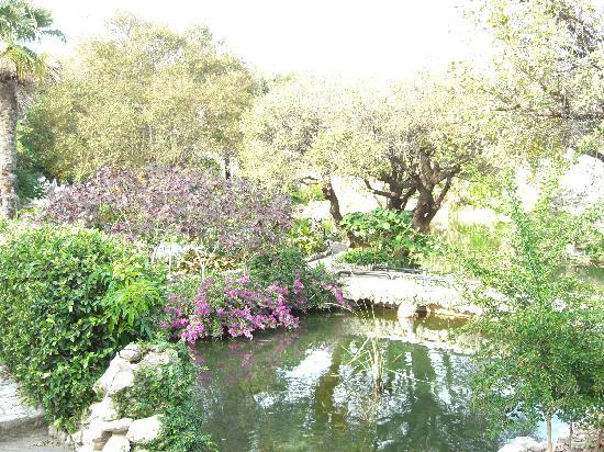 Japanese Tea Gardens: December flowers at the Japanese Gardens