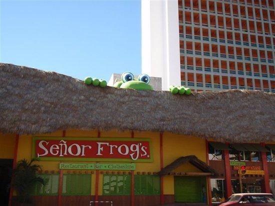 Senor Frog S Mazatlan Restaurant Reviews Phone Number