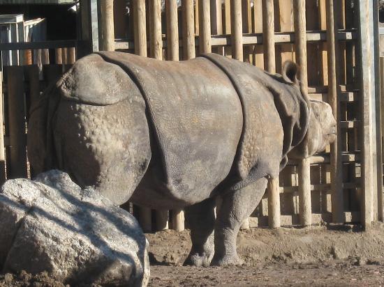Zoo Aquarium de Madrid: il rinoceronte
