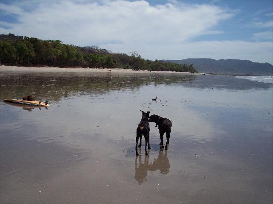 Hotel Playa Carmen: Playa Santa Teresa