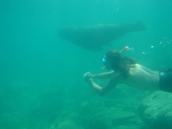 Gold Coast Adventure: Sea lions @ Isla Espiritu Santo