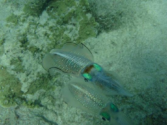Octopus Resort: close up squid