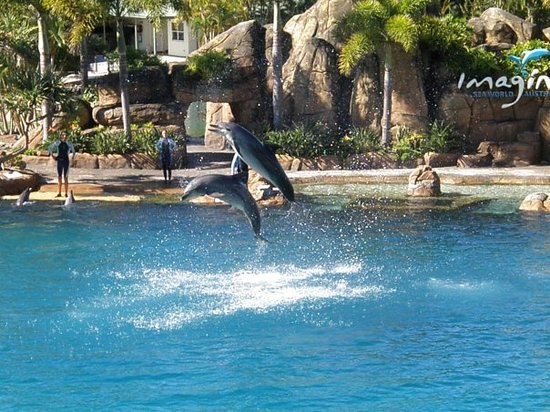 Guldkusten, Australien: Gold Coast Sea World