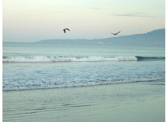 Nuevo Vallarta Beach: brown pelicans