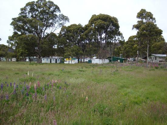Bronte Park Village: view