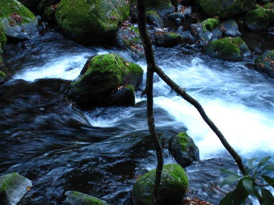 Kikuchi Valley: 菊池渓谷