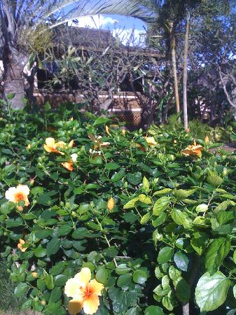 Napili Kai Beach Resort: Beautiful flowers on property