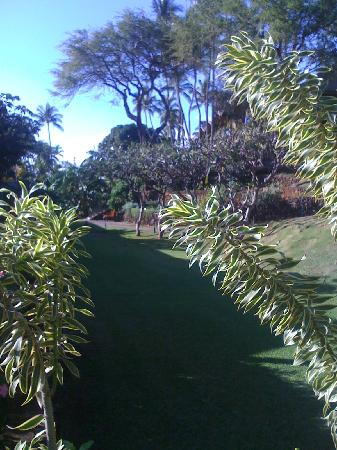 Napili Kai Beach Resort: Landscaping on the property