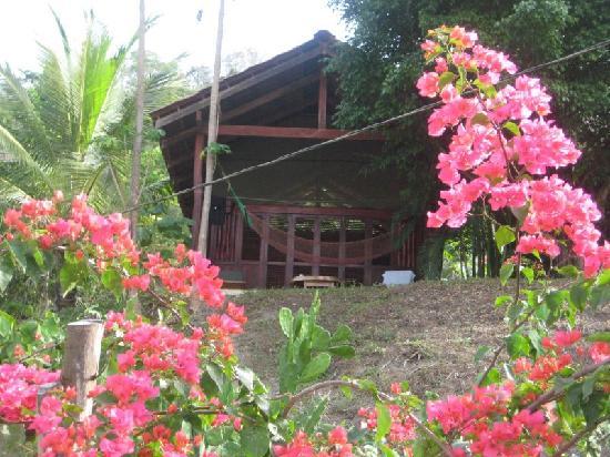 Funky Monkey Lodge: Cabin #1