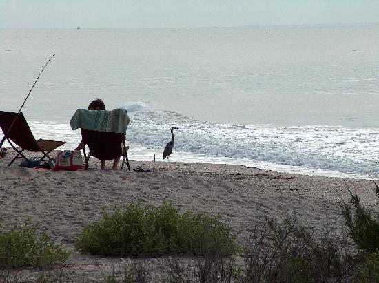 Sea Oats Beach Club Sline At Resort