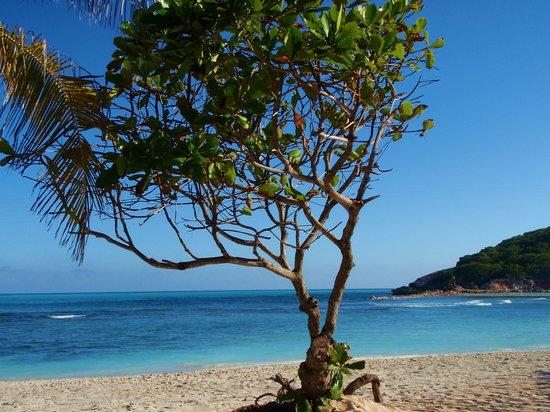 Haití: a tree on the beach