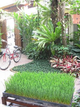 Pak Chiang Mai: B&B grounds - from inside looking to front door
