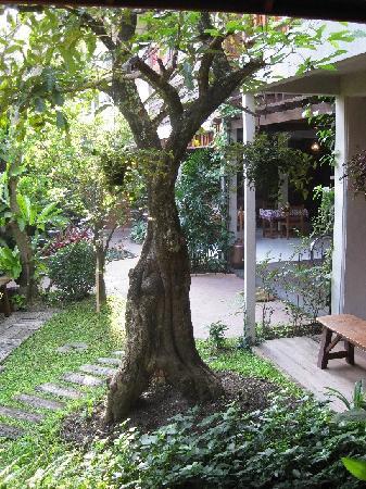 Pak Chiang Mai: B&B grounds