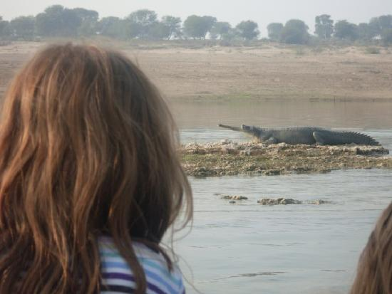 Mela Kothi - The Chambal Safari Lodge: Lucky we were in a boat