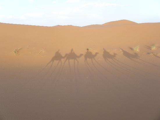 Moroccan Sahara: Camel back riding @ Sahara