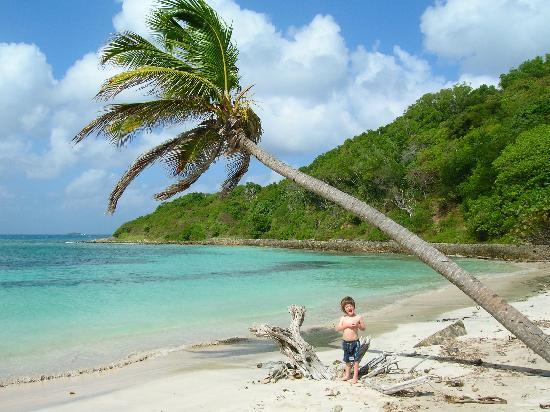 Dennis' Hideaway: Local Beach
