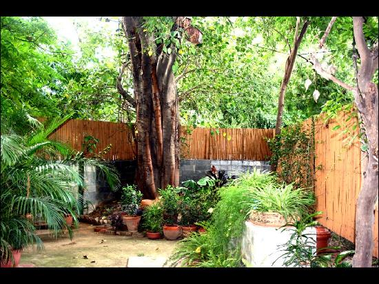 Saubhag Bed and Breakfast: The garden