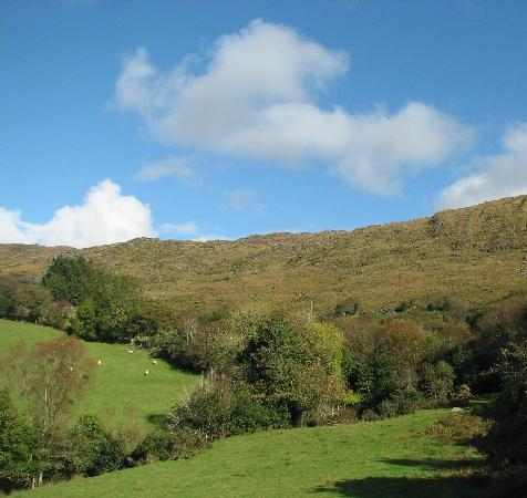 Carraig Dubh House : View from the B&B on the backyard