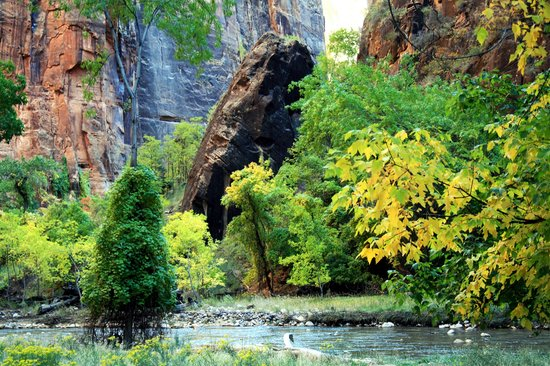 Zion National Park, ยูทาห์: Zion Park #31