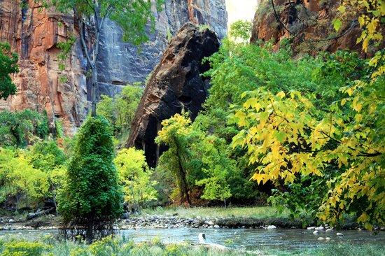 Zion Nationalpark, UT: Zion Park #31