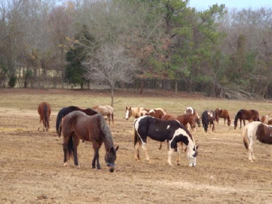 Southern Cross Ranch: Superior Quality horses