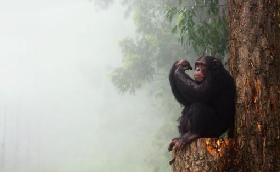 Chimp Eden Boutique Hotel: Nicky in the Mist