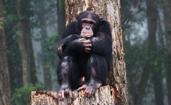 Chimp Eden Boutique Hotel: Hanging with Nicky