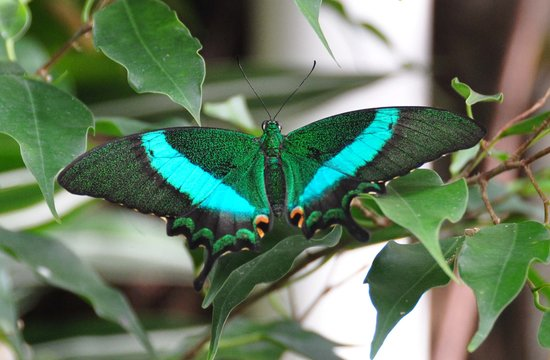 Région des lacs, UK : Williamson Park Butterfly House, Lancaster