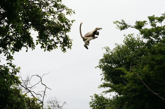 "Anjajavy, Madagascar: les ""voisins"""