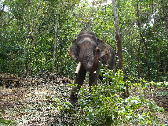 Neyyar Wild Life Sanctuary: Elephants, Kerala India