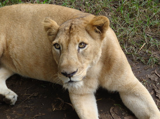 Trivandrum, Indien: Lion Safari - Neyyar
