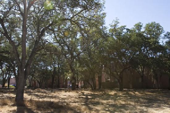 Hidden Oaks Village: Trees