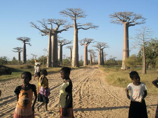 Avenue of the Baobabs: Sun beginning to set at Baobab Avenue
