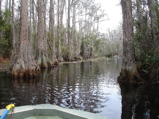 Swamp Cinema