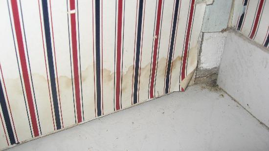 Rio Colinas Hotel: the wallpaper