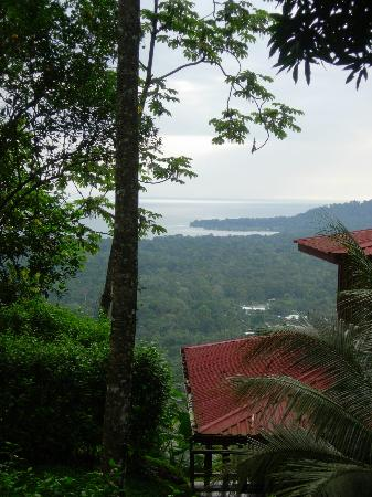 Samasati Retreat & Rainforest Sanctuary: morning glimpse