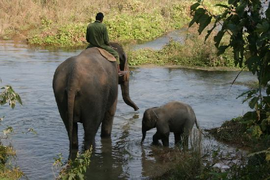 Chitwan Jungle Lodge: Baby elephant