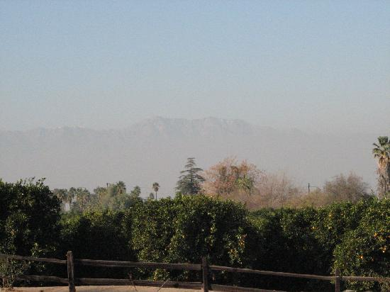 California Citrus State Historic Park: View of groves and distant mountains