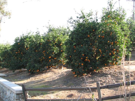 California Citrus State Historic Park: Closer view of the citrus groves at the Citrus park