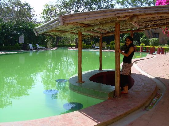 Bush Betta Wildlife Resort: Swimming Pool