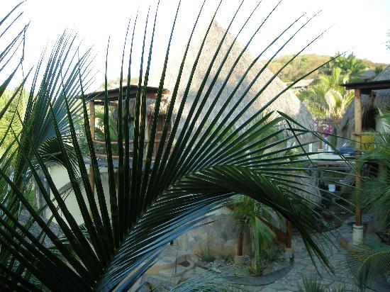 Punta Placer Bungalows : Le palme di Punta Placer