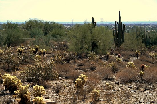 Scottsdale, AZ: Westward View