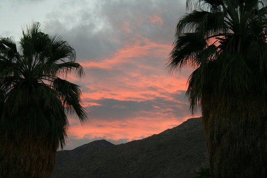 Palm Springs, CA: Palms in the Afterglow
