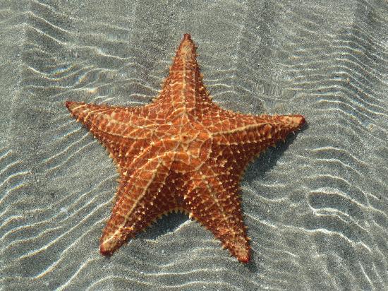 Lodge at Swan's Cay: Starfish Beach