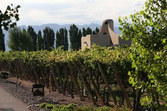 Cavas Wine Lodge: view