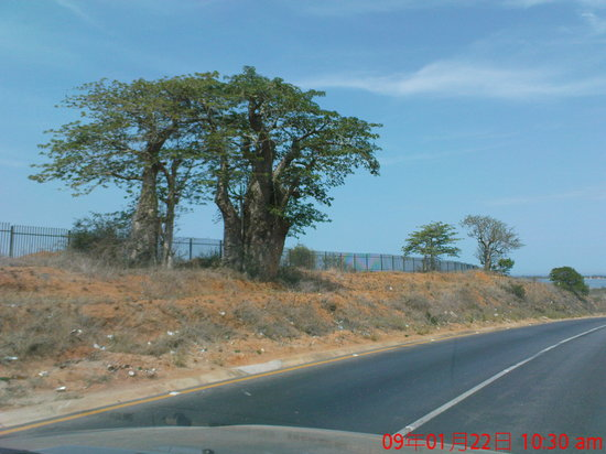 Luanda, Angola: Bread tree