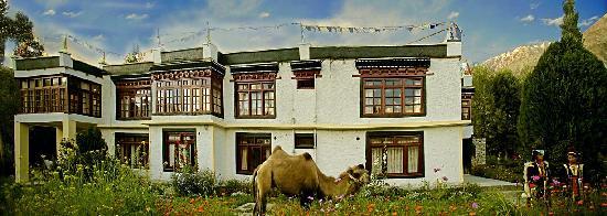Yarab Tso: The baktrian camel