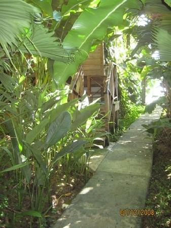 Garden of Eden Inn: Path to our room and out toward rear dock